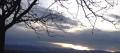 Trees-N-Skies